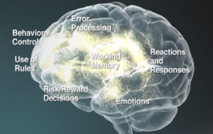 The successful application of executive function skills requires them to operate in coordination with each other.