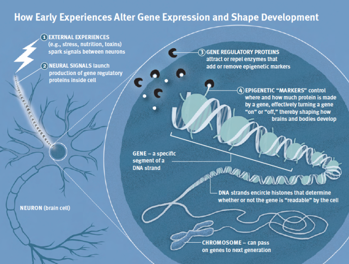 gene-experience-illustration