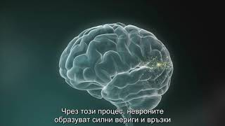 Brain diagram with Bulgarian subtitles
